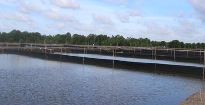 Nghiên cứu chuyển đổi diện tích nuôi trồng thủy sản không hiệu quả sang nuôi cá chẽm