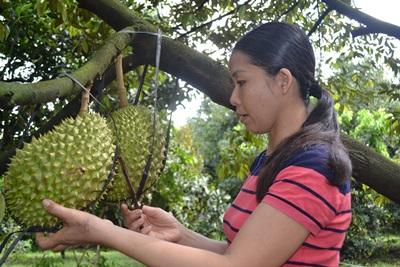 Hiệu quả từ mô hình trồng trái cây sạch kết hợp phát triển du lịch sinh thái vườn