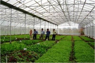 TP.Biên Hòa: Tập trung phát triển nông nghiệp theo hướng ứng dụng công nghệ cao