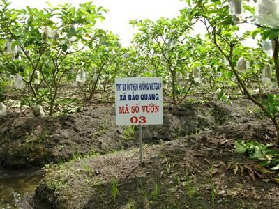 Nông dân chủ động sản xuất sạch, an toàn để tìm cơ hội xuất khẩu