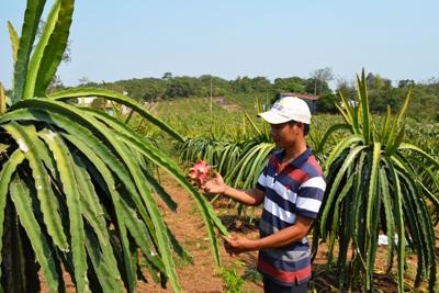 Nhân rộng các mô hình sản xuất nông nghiệp hiệu quả: Cần giải quyết tốt khâu đầu ra cho sản phẩm