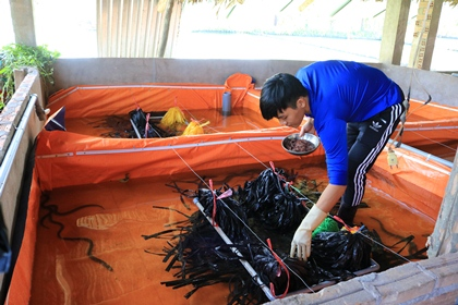 Nuôi lươn không bùn mang lại hiệu quả kinh tế cao