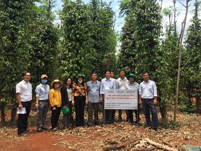 Xây dựng mô hình sản xuất hồ tiêu đạt tiêu chuẩn GlobalGAP tại huyện Xuân Lộc