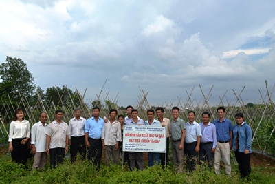 VietGAP certificates awarded to 9 vegetables-growing households in Vinh Tan commune