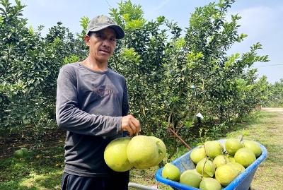 Tập trung đẩy mạnh phát triển nông nghiệp hữu cơ