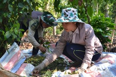 Trảng Bom: Triển khai các dự án ứng dụng tiến bộ kỹ thuật trong nông nghiệp
