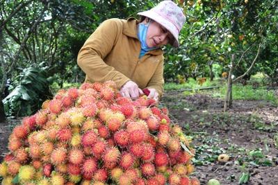Để trái cây Đồng Nai rộng đường xuất khẩu: Cần thực hiện tốt các quy chuẩn về sản xuất sạch, an toàn