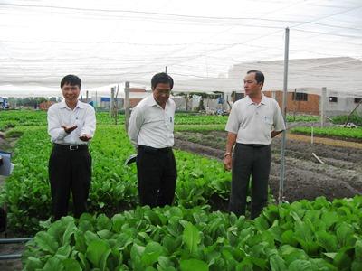 A VietGAP leafy green vegetables growing model in Bien Hoa city certified
